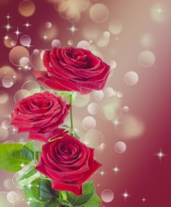 rose-1985471_1280